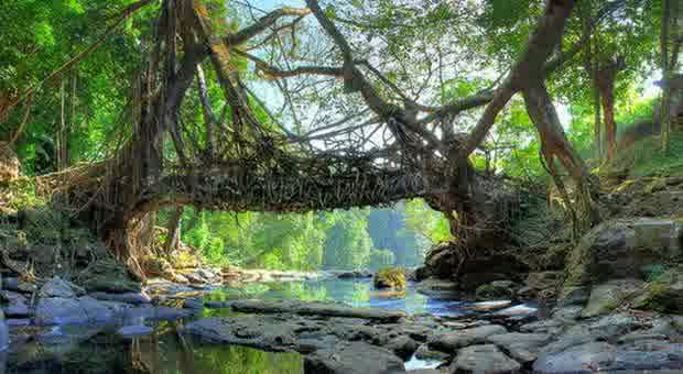 jembatan akar